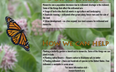 Oklahoma milkweed supply decreases, affecting monarch butterfly migration